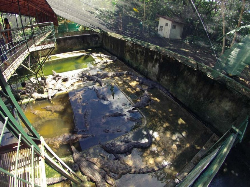 Crocodile Sanctuary Palawan