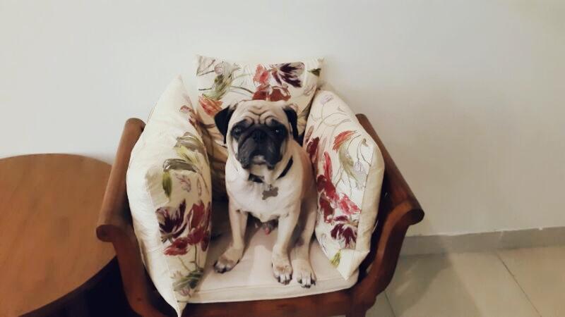 adopting-a-dog-in-dubai