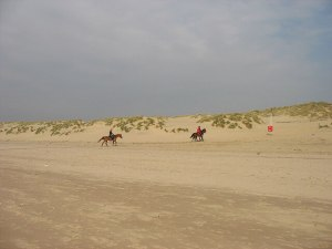Horse Rides at Camber Sands - Camber Sands Holiday Park