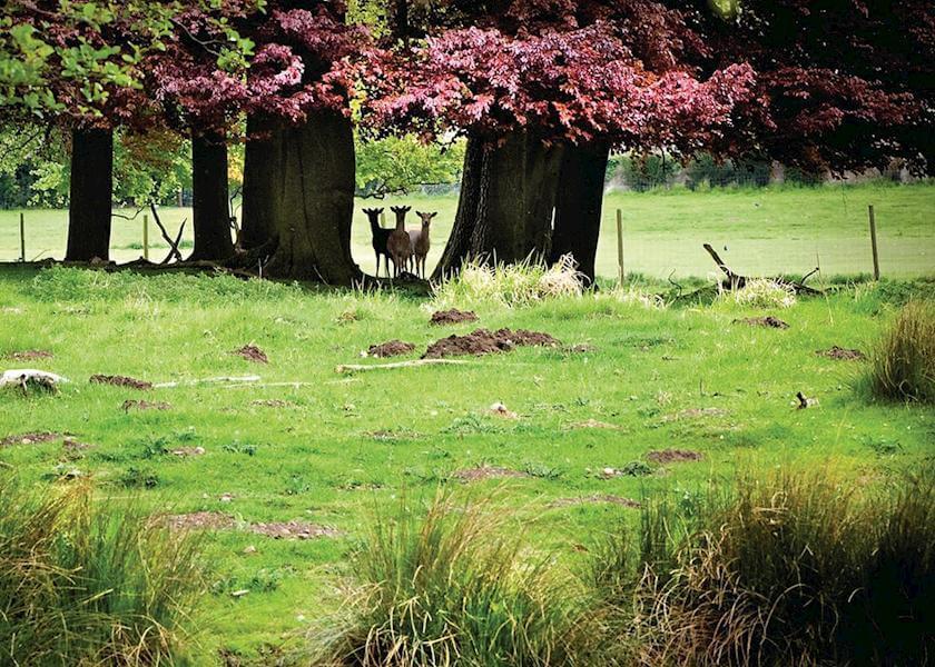 Sherwood Hideaway Deer