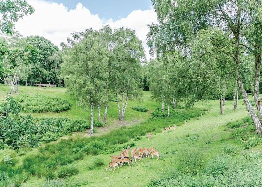 Silver Trees Deer