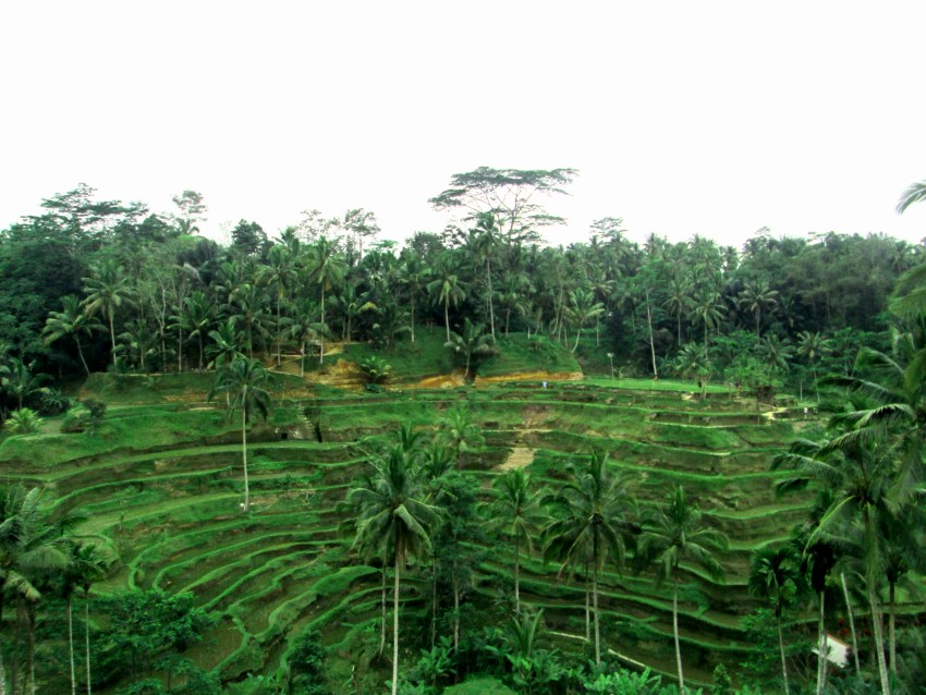 Tegalalang Rice Terrace, Bali