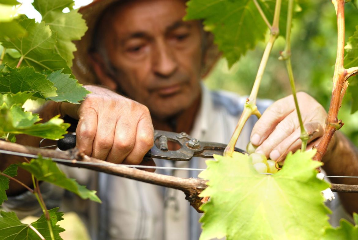 The rising opportunity of wine tourism in Italy