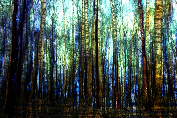 impressionism-forest-woods-trees