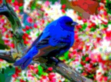 Animal Art Blue Bird