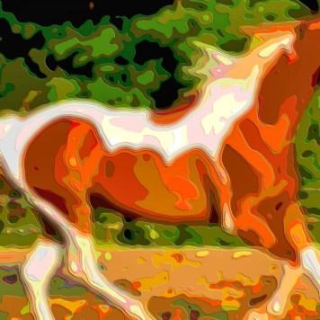Animal Portrait Art Horses