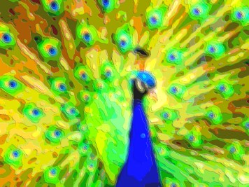 Animal Portrait Art Peacock