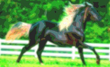 Horse Art Animal Portrait