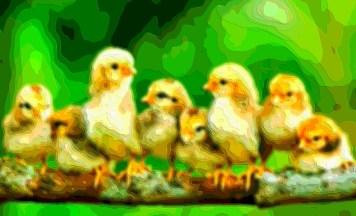 Animal Art Birds
