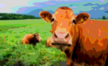 Animal Portrait Moo Cow