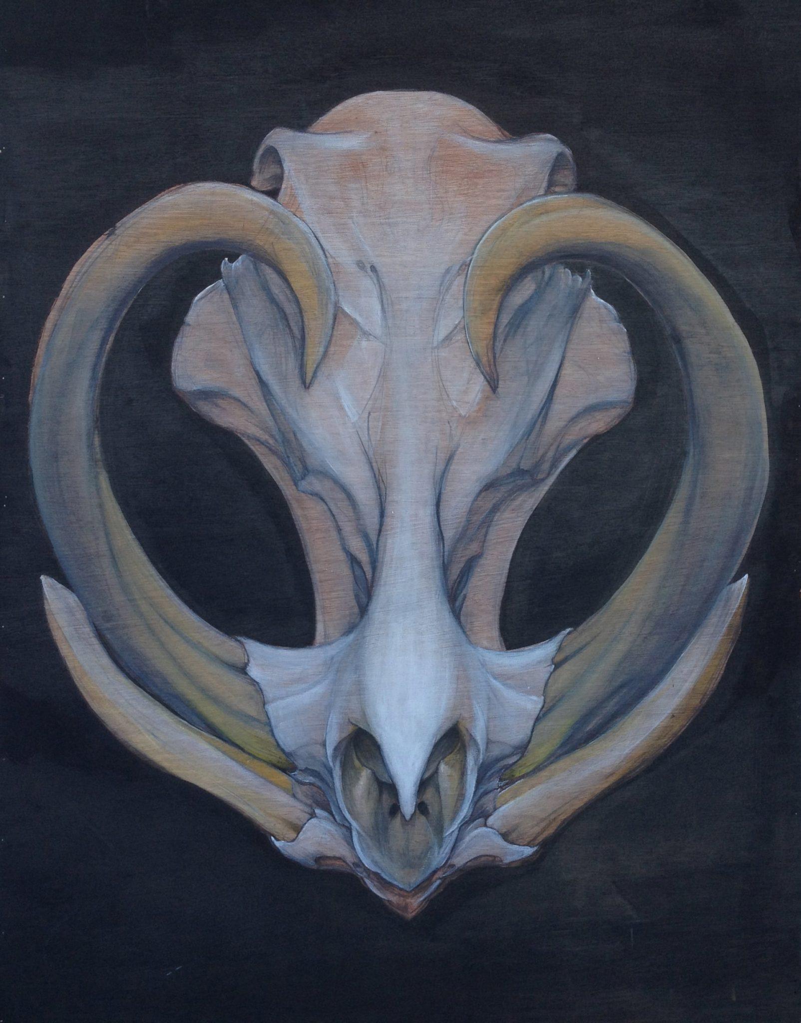 Skull Studies | Fine Art For Bodies | Premium Custom Body Art