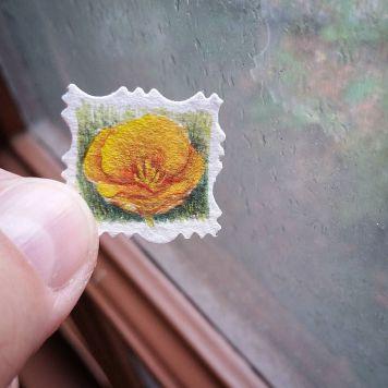 California Poppy State Flower