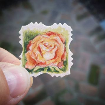 New York Rose State Flower