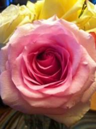 Bouqs Rose Detail
