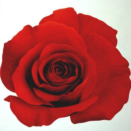 G_Red Rose_web