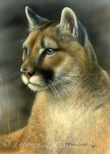mountain lion cougar oil painting