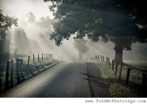 misty tree road todd mcphetridge