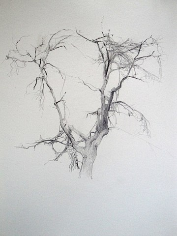 T Allen Lawson drawing of tree