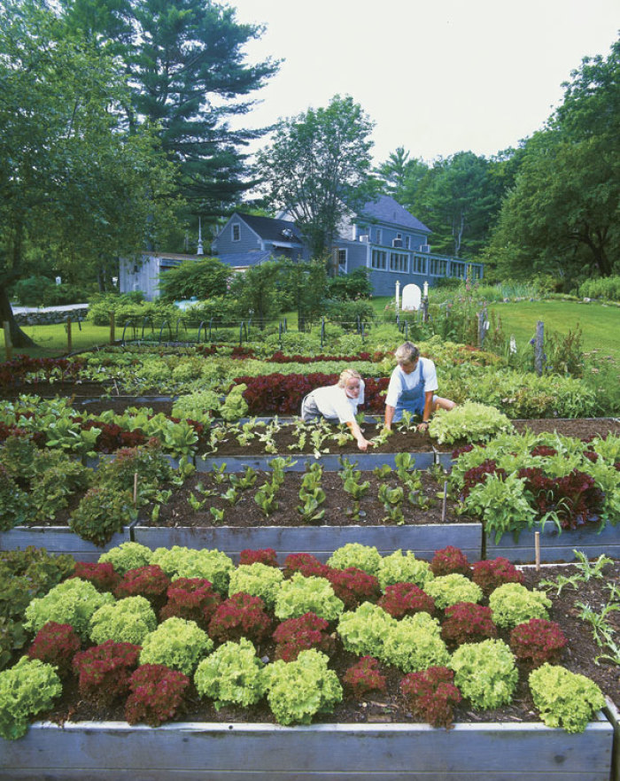 Lessons From A Restaurant Garden Finegardening