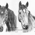 Charcoal Horse Drawings Charcoal Horse Portraits From Photos