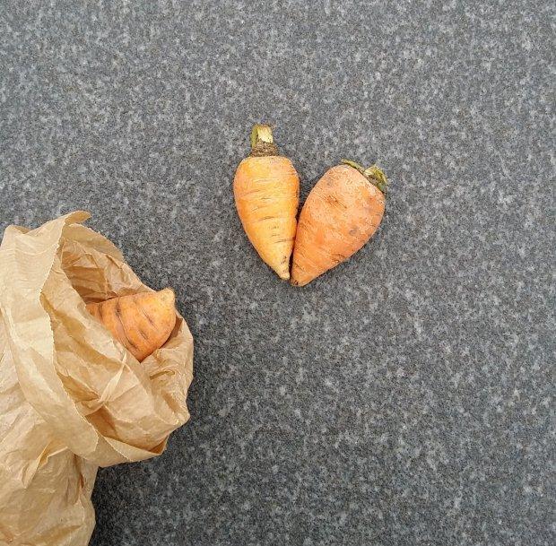 ochsenherz-carrot-heart(C)Vockenhuber
