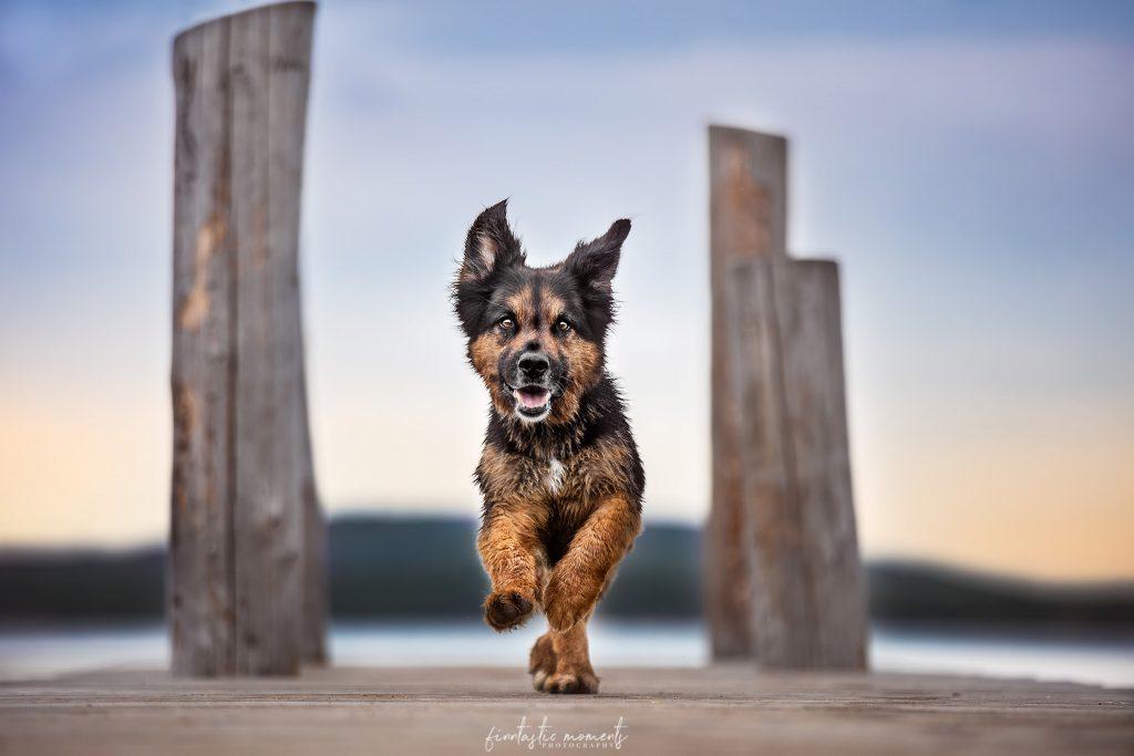 Hund auf Steg am See