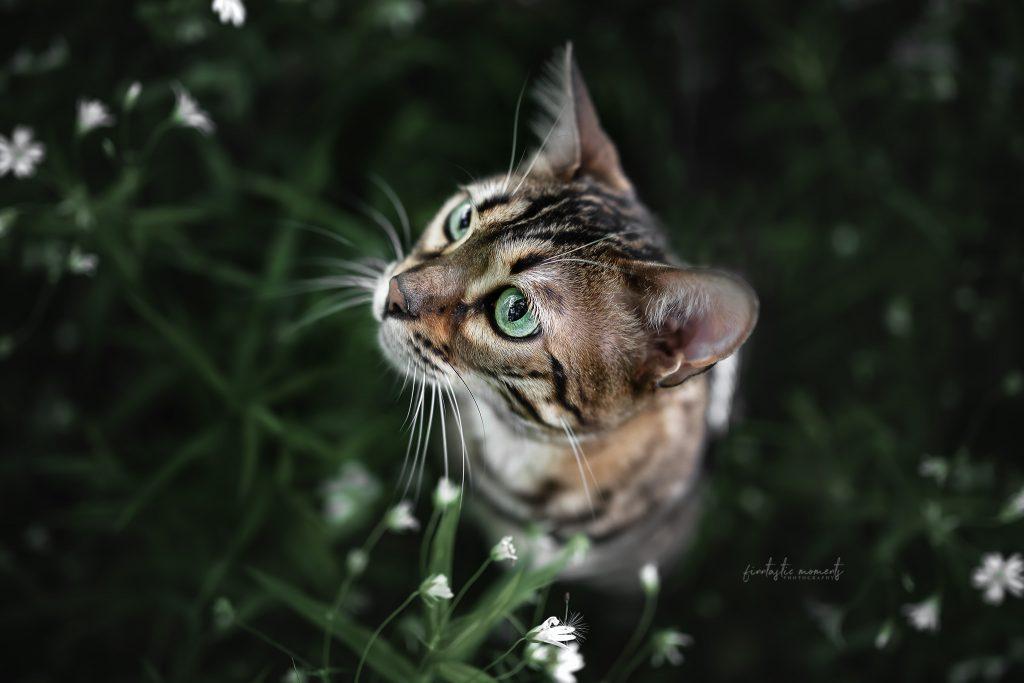 Katze in Blueten