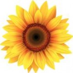 Large sunflower - think outside yourself