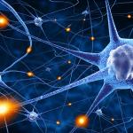 Neuroplasticiy - neural pathways