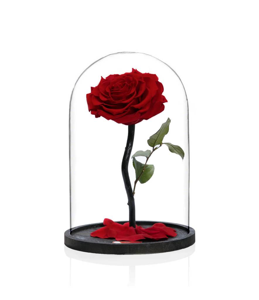 PER SEMPRE RED MEDIUM (BEAUTY AND THE BEAST)