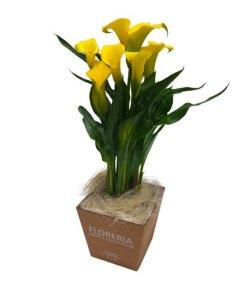 calla in vaso gialla