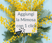 Mimosa 8 marzo