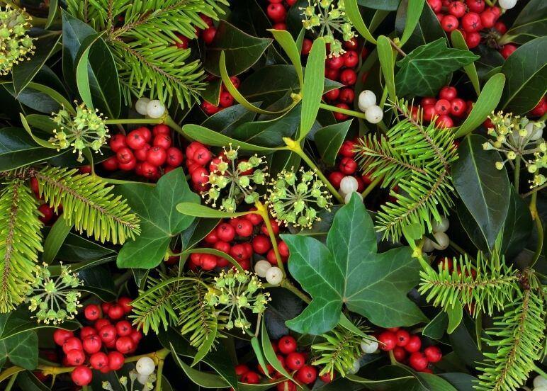 bacche e fiori di stagione in inverno