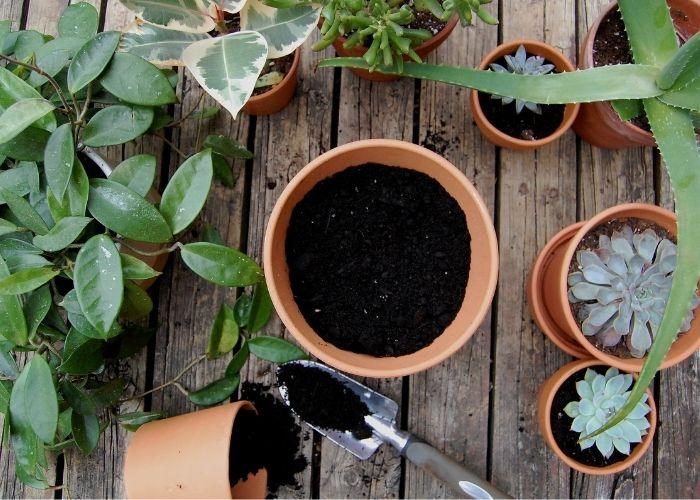 Il rinvaso è fondamentale per una crescita corretta e rigogliosa della piante, deve avvenire in primavera