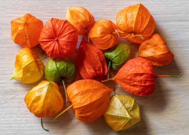 bacche di alkekngi arancioni