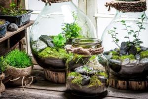 Il Terrarium è formato da un contenitore di vetro trasparente al cui interno vengono collocate delle piante