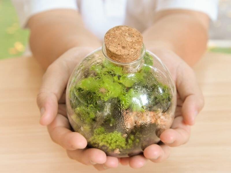 L'abbondanza della condensa è il miglior indicatore di benessere del terrarium