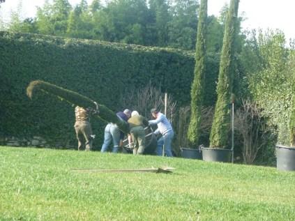 Posizionamento alberi