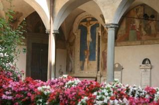 Particolare di allestimento di begonie in San Marco a Firenze