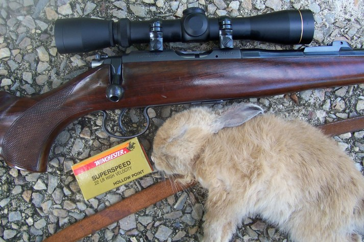 The author's small game rifle. The Brno model 2 set up with the VX1 in Leupold low rimfire rings. It accounted for this young rabbit at 75m.