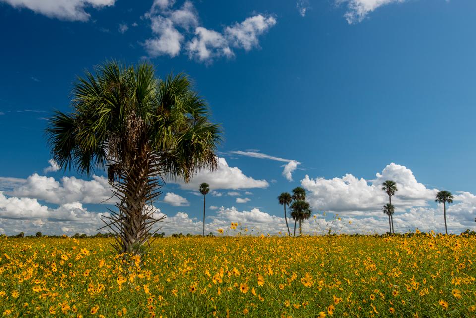 Lake Jesup Wildflower Fields
