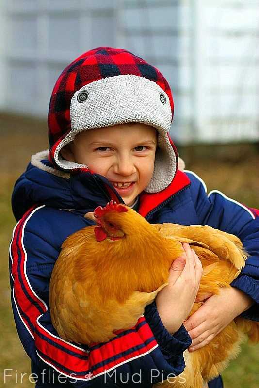 caring for hen