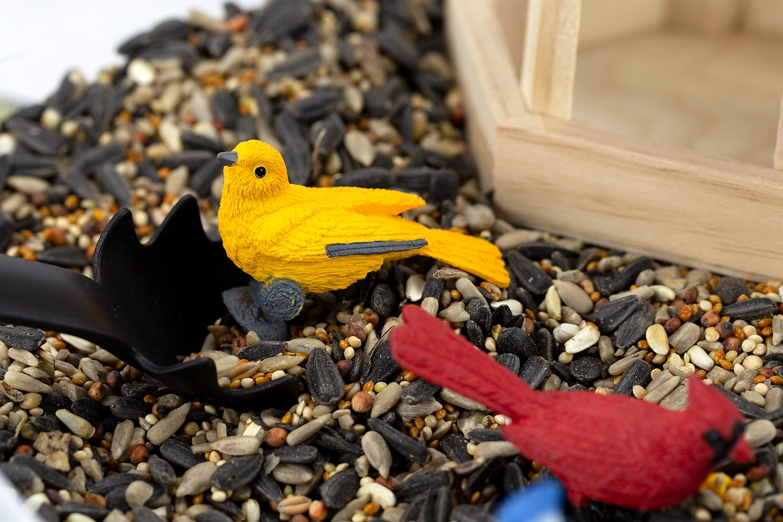 Yellow and Red Birds in a Birdseed Sensory Bin