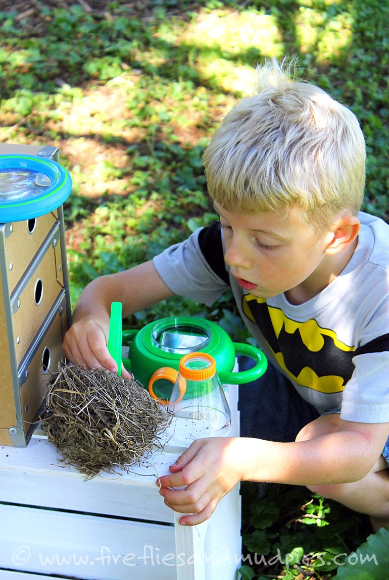 Why to Start and How to Organize a Kid's Nature Collection | Fireflies and Mud Pies