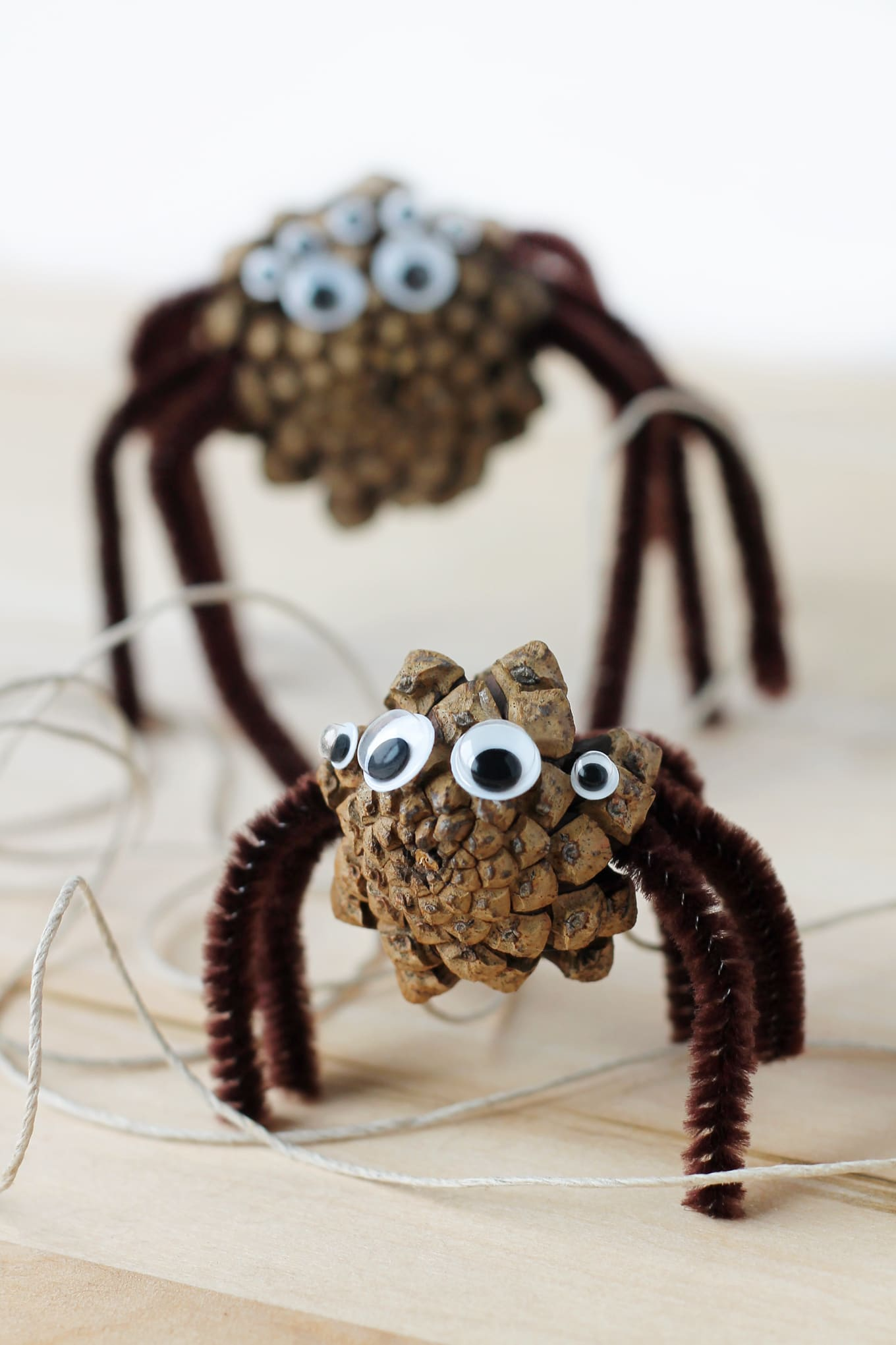 Two Pine Cone Spiders