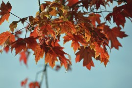 Helpful Fall Fire Safety Tips