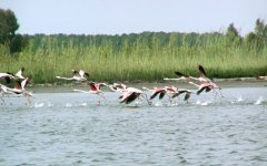 Caldo: Toscana nella stretta dell'afa. Emergenza regionale (rischio morìa di pesci) nella Laguna di Orbetello