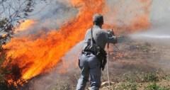 Distrutti nell'incendio 50o metri di sterpaglie