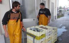 Massa, nasce il mercato del pesce a km zero