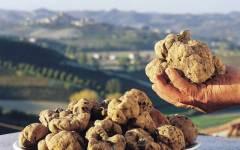 Tartufi, Toscana: produzione record e prezzi popolari dopo la pazza estate
